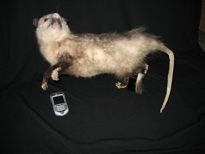 text-o-possum...the future!